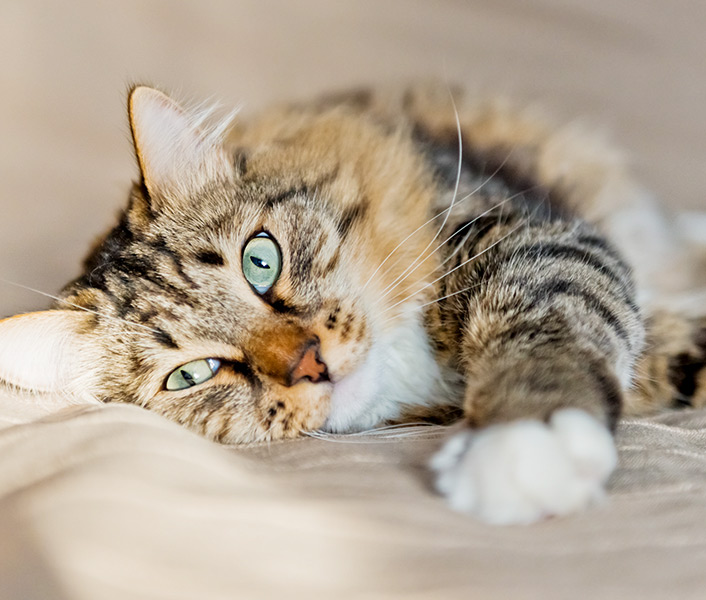 Cats – Humane Society of Boulder Valley