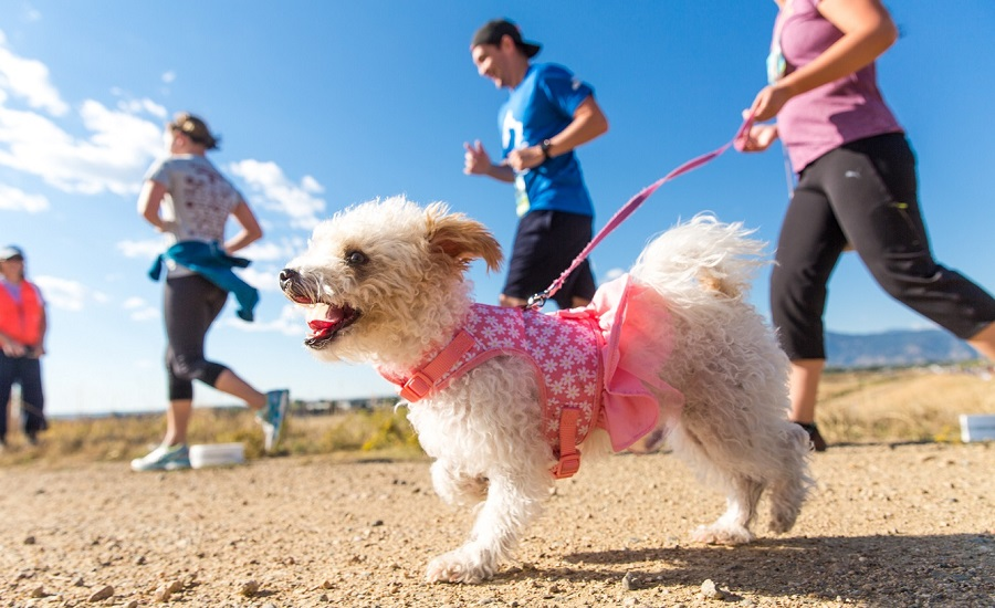 Humane Society of Boulder Valley – Creating Healthy