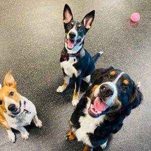 puppy club group